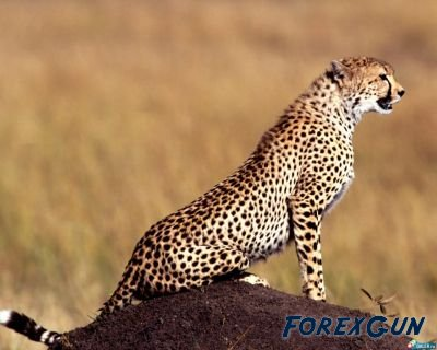 Советник Gepard 4.2 - скачать бесплатно!